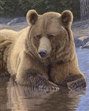 Cool Down - Grizzly Art Print