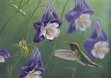 Hummingbird Purple - Columbine Art Print