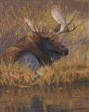 Nested in Teton - Moose Art Print