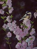 Springtime Blossoms - Chickadee Art Print