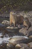 Otter Tail River Otters Art Print