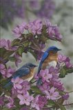 Bluebirds & Spring Blossoms Art Print