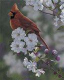Cardinal Spring Blossoms Art Print