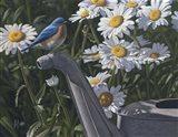 Bluebird Daisies Art Print