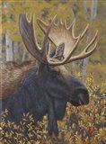 Moose Portrait Art Print