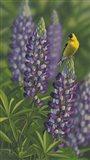 Goldfinch Lupine Art Print