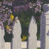 Goldfinch Trio Art Print