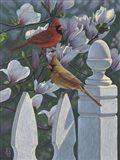 Cardinals Magnolias Art Print