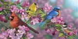 Songbird Colors Art Print