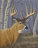 Sunlit Whitetail Art Print