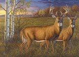 Whitetail Dawn Art Print