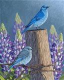 Mountain Blues Lupines Art Print