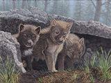 Wolf Pup Trio Art Print