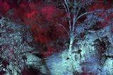 Moonlight Forest Art Print