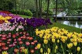 Colorful Corner Keukenhof Tulips Garden 1 Art Print