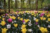 Colorful Corner Keukenhof Tulips Garden 2 Art Print