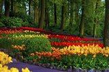 Colorful Corner Keukenhof Tulips Garden 3 Art Print