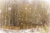 First Snowflakes Art Print