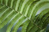 Healing Art Fern Leaf After Rain Art Print