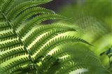 Healing Art Fern Leaf Art Print
