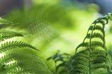 Healing Art Fern Leaves Art Print