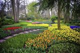 Colorful Corner Keukenhof Tulips Garden 4 Art Print