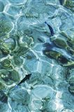 Maldives Fishes in the Clear Water 2 Art Print