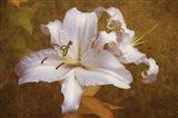 White Llilies Art Print
