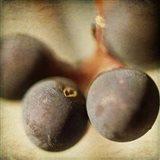 Berries 5 Art Print