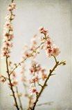 Spring Whispers 2 Art Print