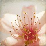 Spring Whispers 3 Art Print