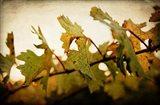 Sunset Vines Art Print