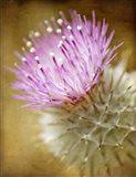Thistle Bloom Art Print