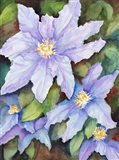 Lavender Cosmos Art Print