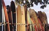 Long Boards Waikiki Art Print