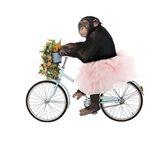 Monkeys Riding Bikes #1 Art Print