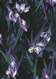 Iristif Art Print