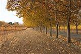 Autumn Rows Art Print