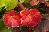 Autumn Leaves 2 Art Print