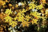 Luminous Leaves Art Print