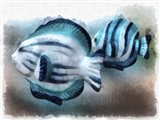 A Pair Of Angel Fish Art Print