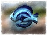 Another Single Angel Fish Art Print