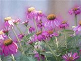 Brilliant Wild Berry Cone Flower Art Print