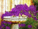 Communal Bath Art Print