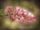 Horse Chestnut Branch Art Print