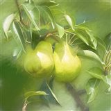 Pear Branch Art Print
