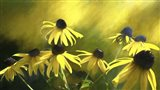 Sun Shine On Black Eyed Susan Art Print