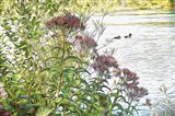 Behind The Milkweed Art Print
