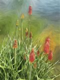 Red Hot Poker Plant Art Print