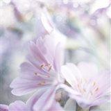 Mystical Gypsy Flower 05 Art Print